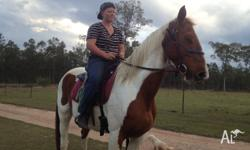 clyesdale x prince is a 8-10 year old paint gelding