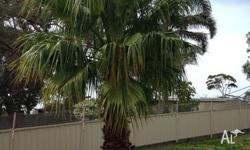 Different size palm trees.Starting at $1000