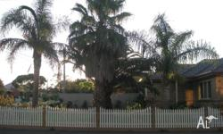 3 Matured palm trees for sale in very good condition.