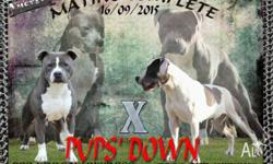 We are experienced ANKC / Dogs SA registered breeders