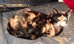 Tiddles is a gorgeous 10 month old torti female.