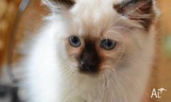 We are a small cattery in Southern NSW and show our