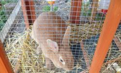 Lovely pet rabbit free to good home. Located at