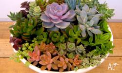 Colourful plant arrangements for home and garden or