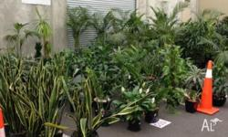 Huge ex-rental Plant & Planter Sale On Saturday 24th