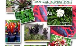 Excellent value for money, top quality plants from only
