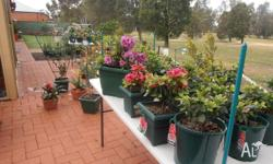 A range of plants various prices. 35cm square pot and