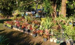 bromeliads $12 to$20 Crotos $8 Hibiscus and others $8