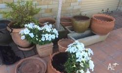 Range of terracota pots and some plants between $10 and
