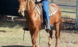flicka is around 13.3hh - 14hh and 3-4 years old when