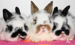 I have lots of baby bunnies for sale at the moment.