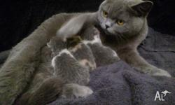 My girl has just had a litter of 4 kittens. She has 2