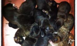 Back by popular demand we have the final litter from