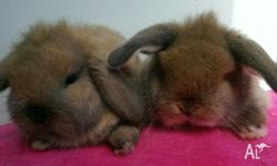 I love my bunnys and put in lots of time & care in