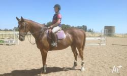 Harry is a 10 year old 16-3 hh chestnut warmblood