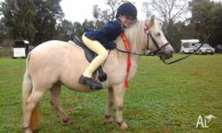 Quiet Shetland 10 hh 7 years old mare great with