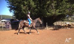 15h bay 4yr gelding stranded bred! Q has lovely moment