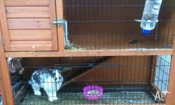 Friendly female rabbit approx 7 months old and Rabbit