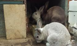 6 rabbits 2 grey, 1 white and 3 brown. Nice and soft to