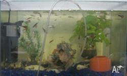 I have a tank with gravel, shells and accessories (2