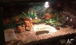 Hi I'm selling my reptile enclosure It's. L= 1.2m W= 47