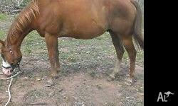 I am offering for sale register paint gelding called
