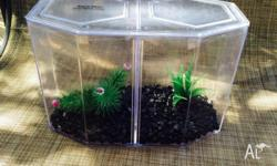 2 Siamese fighting fish tanks for sale. 1 x Aqua one