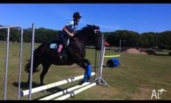 Jellybean is a beautiful show jumping gelding.