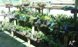 An extensive selection of succulent plants for sale in