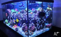 Ever wanted to have a marine or reef tank in your home?