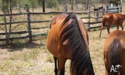 I have 3 broodmares for sale 2 are registered they are