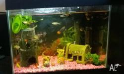 TROPICAL FISH TANK & FISH - perfect size starter tank