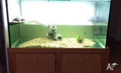 Turtle and turtle tank with stand, light, filter and