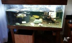 I have a turtle tank on open stand and hood for sale. *