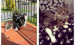 I have two beautiful cats looking for a new home. Barry