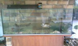 Two turtles, large tank, UV lamp (needs new bulb),