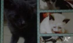 Very friendly kittens HEALTHY & WORMED VERY USED TO