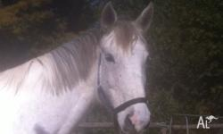 Lovely 17.2hh warmblood mare. Has done eventing,