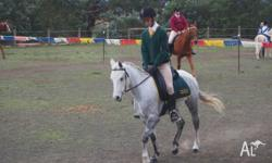 Chelsea is a 5 year old Welsh B Mare, who will take an