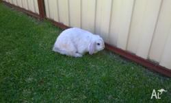 Very friendly rabbit, can be picked up and cuddled or