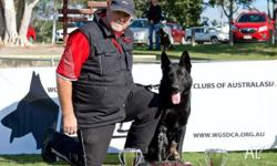 Von Darcor German Shepherds are pleased to announce the