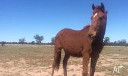 Banjo is a lovley young gelding. Been handled since