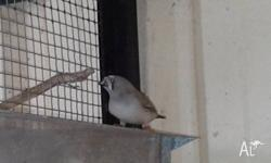 I have 2 young zebra finches Great Buy $5 each please